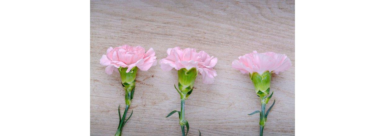 Forspiring af blomster